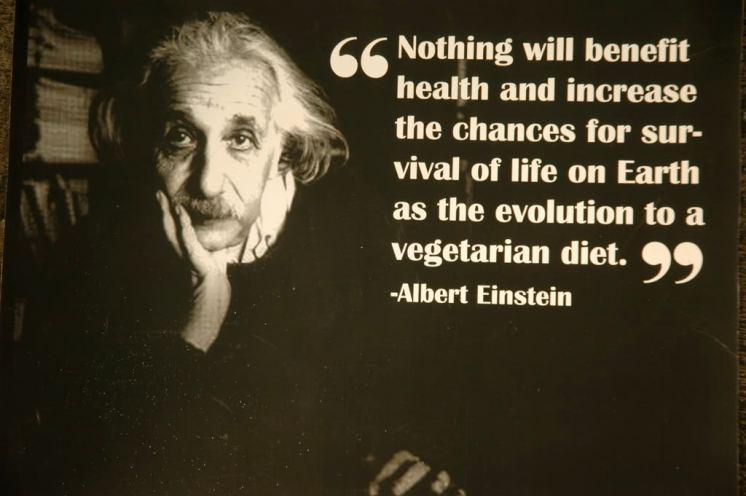 albert-einstein-vegetarian-quote-31